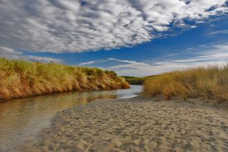 Photo: Natuur op Neeltje Jans