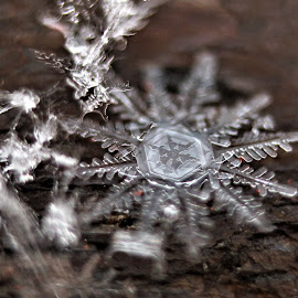 12- Sided Snow Flake by RichandCheryl Shaffer - Nature Up Close Other Natural Objects