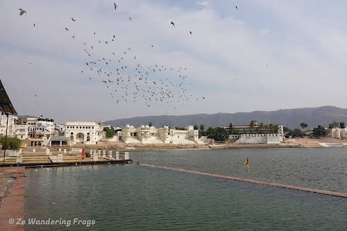India. Rajasthan Pushkar . Early Morning Birds at the Pushkar Lake.