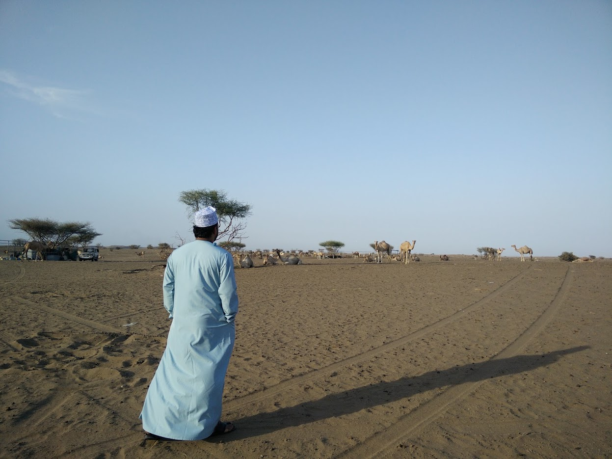 oman desert camel driver holiday