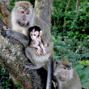 family by Gedion Kristianto - Animals Other