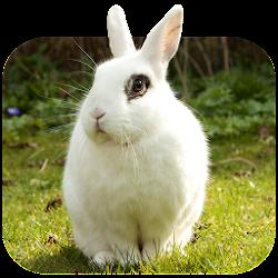 Cute Rabbits Wallpapers