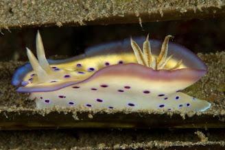 Photo: A Nudibranch