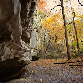 Starved Rock State Park by Terry Ralston - Landscapes Prairies, Meadows & Fields