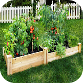 DIY vegetable garden
