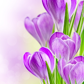 Spring Flowers Themes