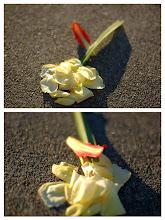 Photo: Meta-flower, blown to pieces.