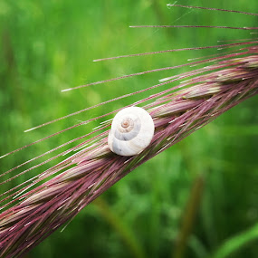 snail by Unknown - Instagram & Mobile Android