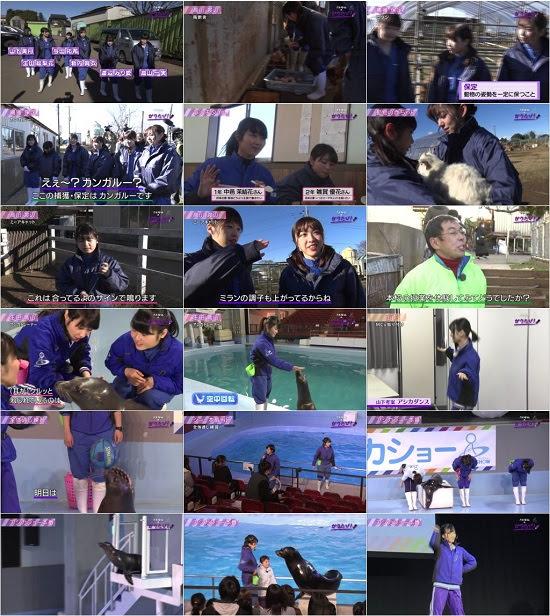 (TV-Variety)(720p) 乃木坂46のガクたび!「動物専門学校」 180121