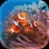 Nemo Fish HD LiveWallpaper