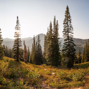 by Daniel Olsen - Landscapes Mountains & Hills ( white pines, scenic, panoramic )