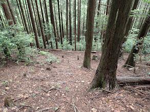 桧尾越からの道と合流