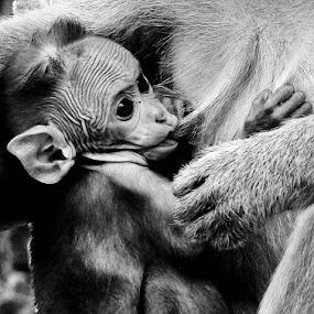 by Deepak Prabhu - Animals Other Mammals