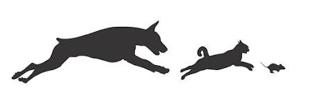 Hoe Kat en Hond een voorbeeld kunnen nemen aan Muis (deel 1)