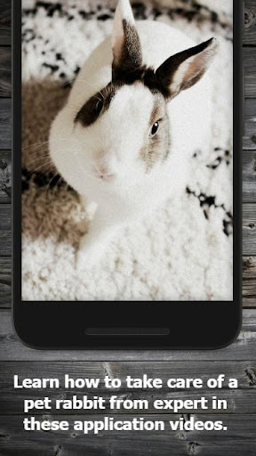 How to Take Care of a Pet Rabbit (Guide) 1.5 screenshots 2