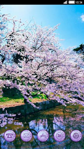 Cherry Blossoms CLauncher Them