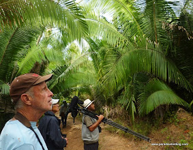 Photo: Birding the palm plantation at Chacalilla