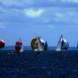 LINE UP by Kendall Eutemey - Transportation Boats ( sailboats, ocean, kendall eutemey, sea )