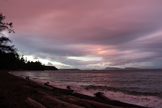 Photo: North Beach, looking northwest, at the end of the day's buffeting winds 6 Nov. The driftwood looks like Storm Dogs