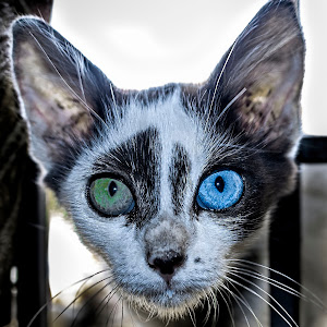 cat s4.jpg