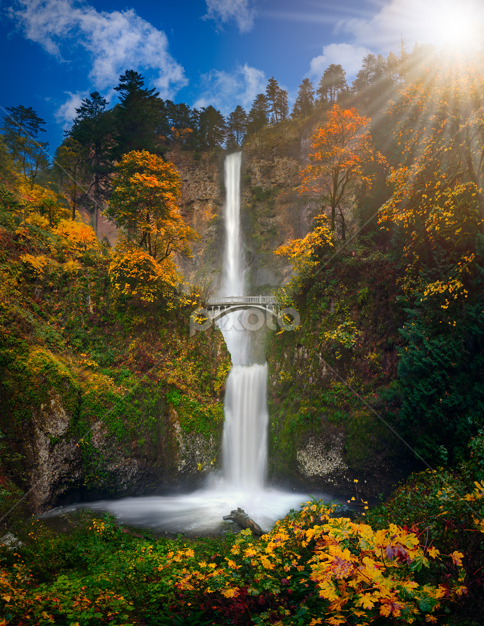 Multnomah Falls in Autumn colors by William Lee - Landscapes Waterscapes ( silky, usa, forest, beauty, color, cliff, northwest, flora, bright, scenic, scenery, trees, peaceful, america, red, beautiful, falls, leaves, fall, stream, grass, waterfall, season, national, landmark, park, smooth, multnomah, famous, green, reflection, nature, cascade, relaxing, brown, water, orange, outdoor, foliage, panorama, columbia, gorge, tranquility, oregon, autumn, bridge, lake, colorful )