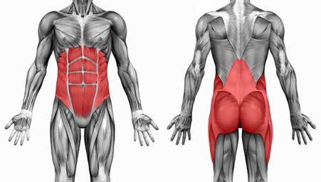 м'язи «кора», або м'язи - стабілізатори, що зберігають хребет, таз та стегна в стабільному положенні