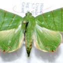 Eulepidotis