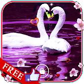 Swans Nice Birds LWP