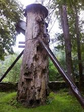 Photo: G8101741 Poreba Wielka - resztka 350-letniego wiazu
