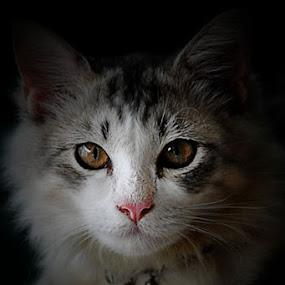by Bem Beng - Animals - Cats Portraits