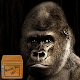 Download wallpaper gorillas For PC Windows and Mac