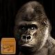 Download wallpaper gorillas For PC Windows and Mac