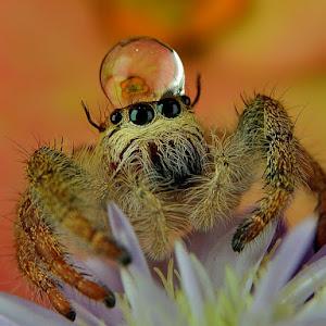 spider_769 02 pix.jpg
