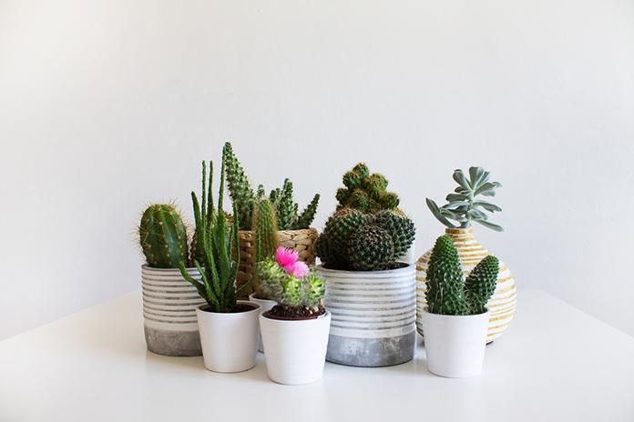 decorar-con-cactus-plantas-duraderas