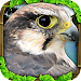 Falcon Simulator icon