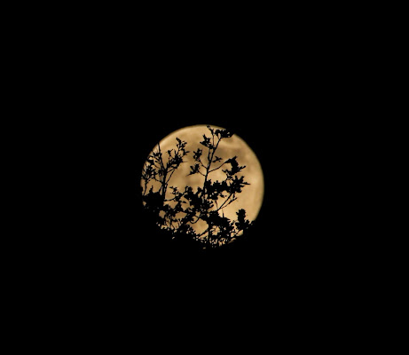 Catturare la Luna è possibile di dino pas