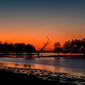 08072017_2975 by Deborah Bisley - Landscapes Sunsets & Sunrises ( water, silky water, sunset, silhouette, trees, beach, dead tree,  )