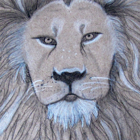 by IS Photography - Drawing All Drawing ( pencil, draw, lion, leo, wildlife, animal )