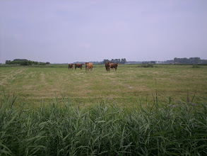 Photo: Puur Natuur in Zuid-Holland