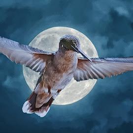 Ruby-throated Hummingbird by Bill Diller - Digital Art Animals ( full moon, moon, ruby-throated hummingbird, michigan, nature, hummingbird, bird, flying, birds, wildlife, birds in flight )