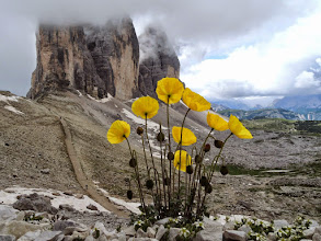 Photo: Tre Cime and flowers
