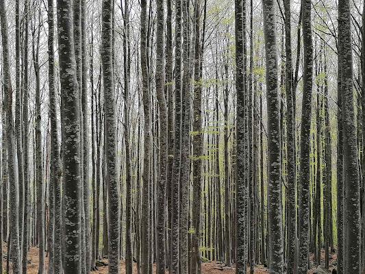 Treesome di ale_guarne