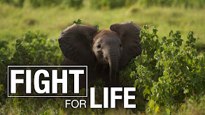 Fight for Life thumbnail