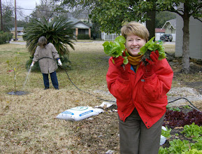 """Photo: """"Lettuce spray""""...that the garden survives the hard freeze!"""