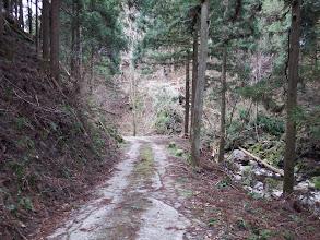 暫くは林道歩き