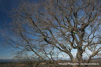 Photo: The Tree acompañador