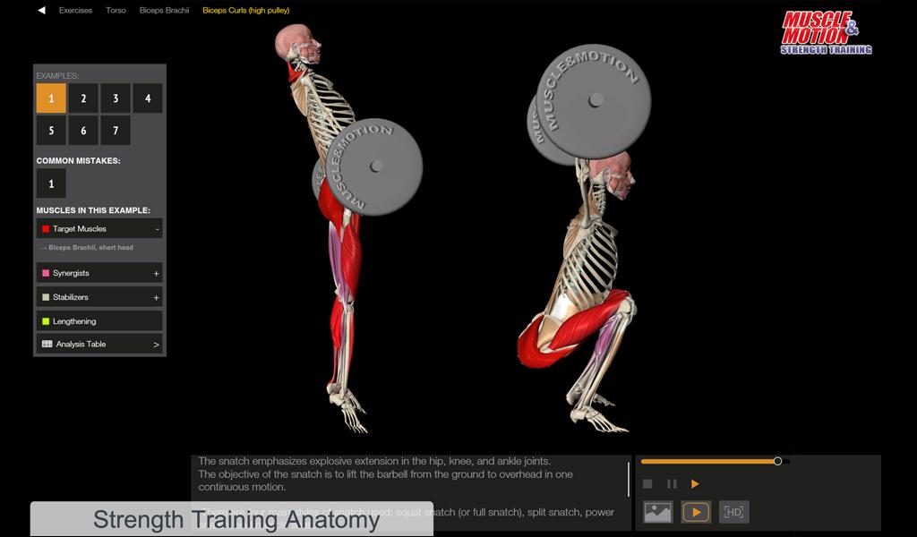 muscle and motion - strength - android apps on google play, Muscles