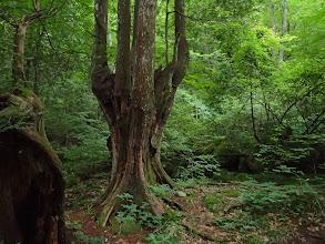 周りに巨木が多く