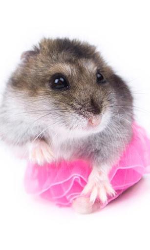 Funny Hamsters Wallpaper