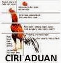 ayam aduan bangkok asli thailand